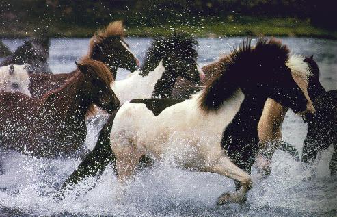 imagenes y cuadros de caballos