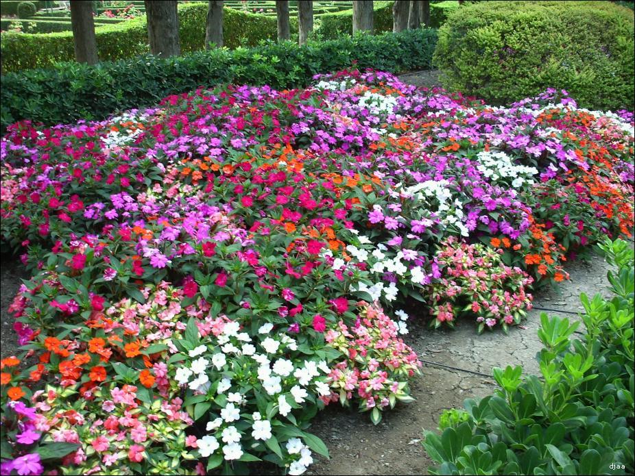 Galera de imgenes for Catalogo de flores de jardin